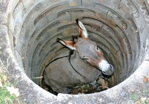 donkey-hole